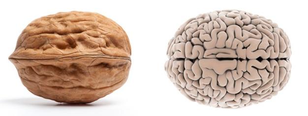 valnød hjerne sund