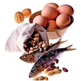 hvorfor er protein vigtigt