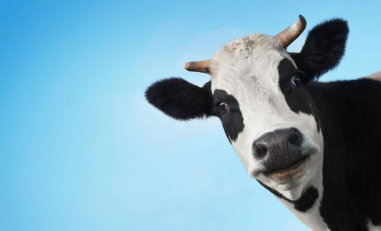 mælk er sundt