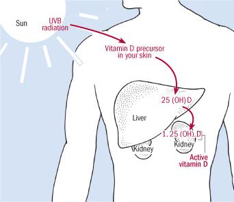 d vitamin funktion i kroppen