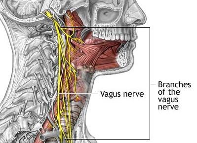 nervus vagus symptomer