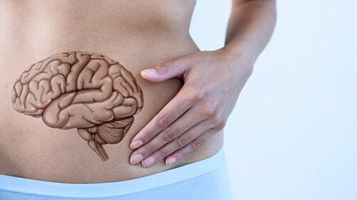 Fordoejelsen - din 3. hjerne
