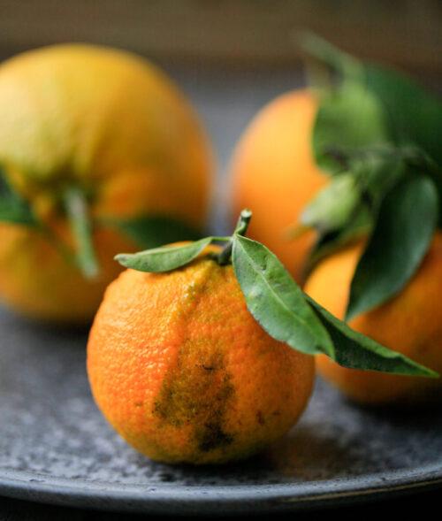 Koeb oekologiske clementiner
