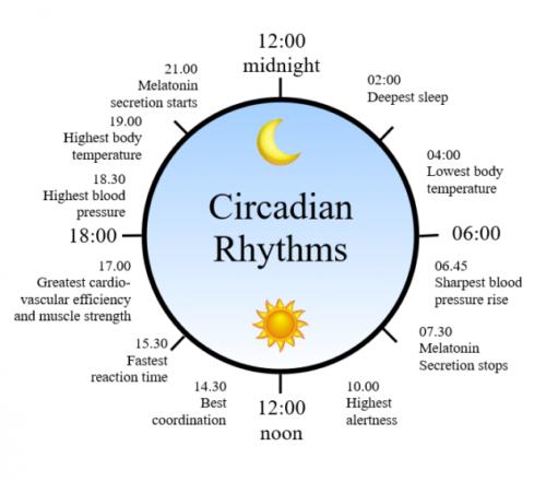 Sov dig slank, foelg din cirkadiske rytme