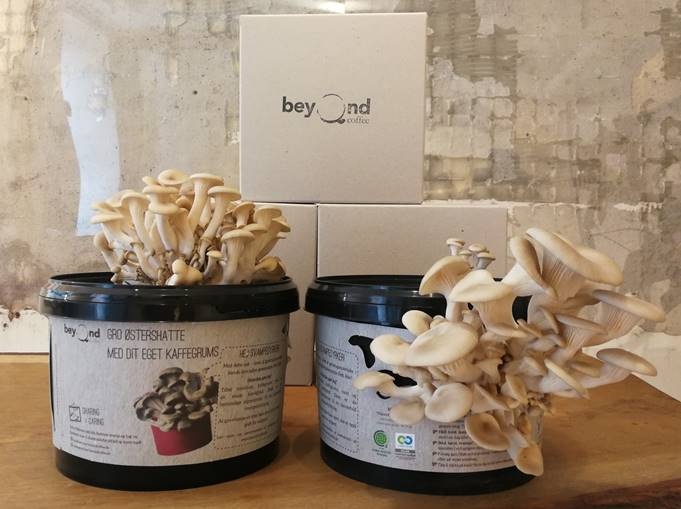 Dyrk svampe i dit kaffegrums