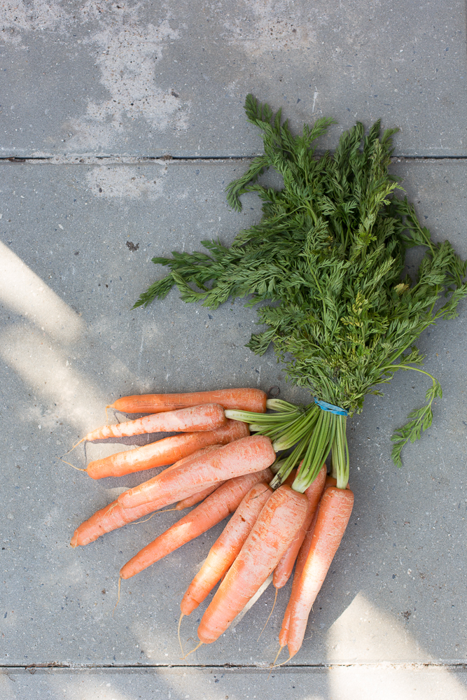 pesticidrester i groensager