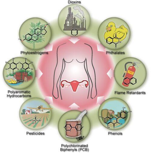 hvad er hormonforstyrrende stoffer?