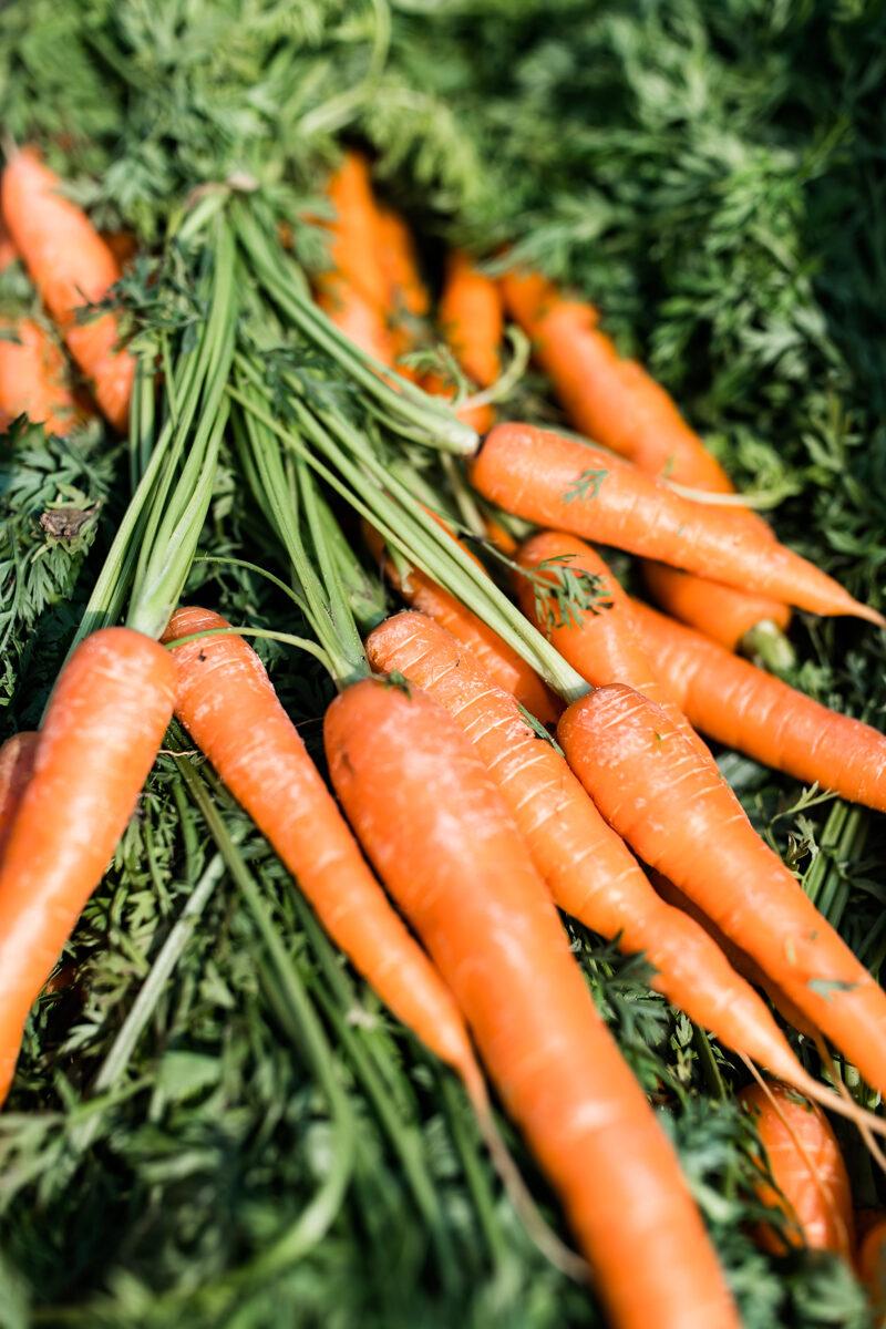 Guleroedder og tarmkraeft - nyt studie viser positive resultater